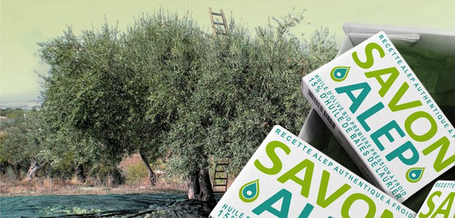 olivier-alep
